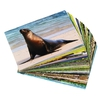 """Bildkarten """"Tiere"""" mit Geräusche-CD"""