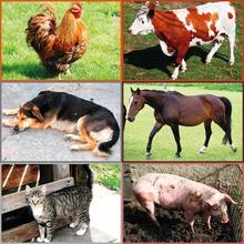 """Puzzle """"Bauernhof-Tiere"""""""