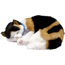 Katze Perfect Petzzz